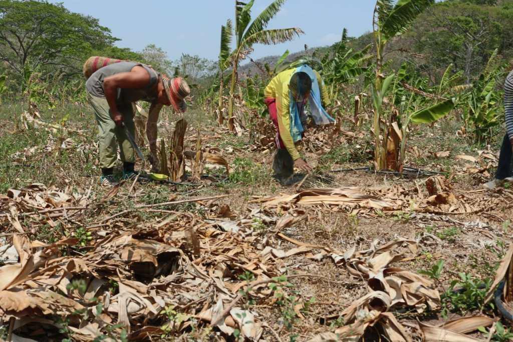 COLOMBIA: EX-GUERILLAER FRA FARC MÅ KLARE DEN SELV